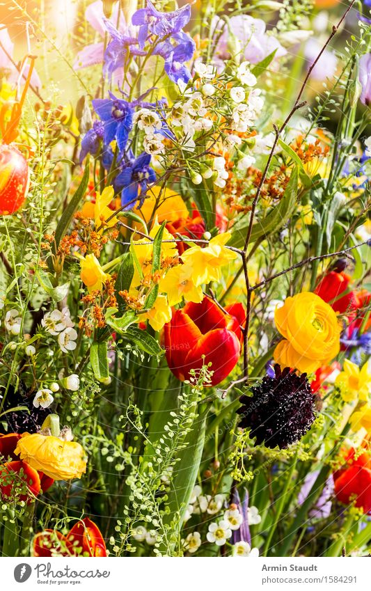 Frühling Natur Pflanze schön Blume Leben Gefühle Blüte Stil Hintergrundbild Lifestyle Garten Stimmung Design Wachstum Fröhlichkeit