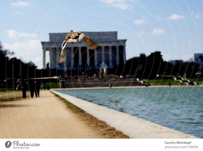 Auf auf und davon. Mensch Himmel Wolken Gebäude fliegen USA Amerika Denkmal Ente Vogel Fluchtpunkt Washington DC