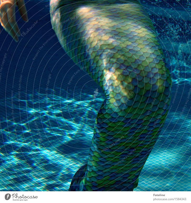 Weder Fisch noch Fleisch? Mensch feminin Kind Mädchen Junge Frau Jugendliche Kindheit 1 Urelemente Wasser Sommer nah nass dünn blau grün Meerjungfrau Fabelwesen