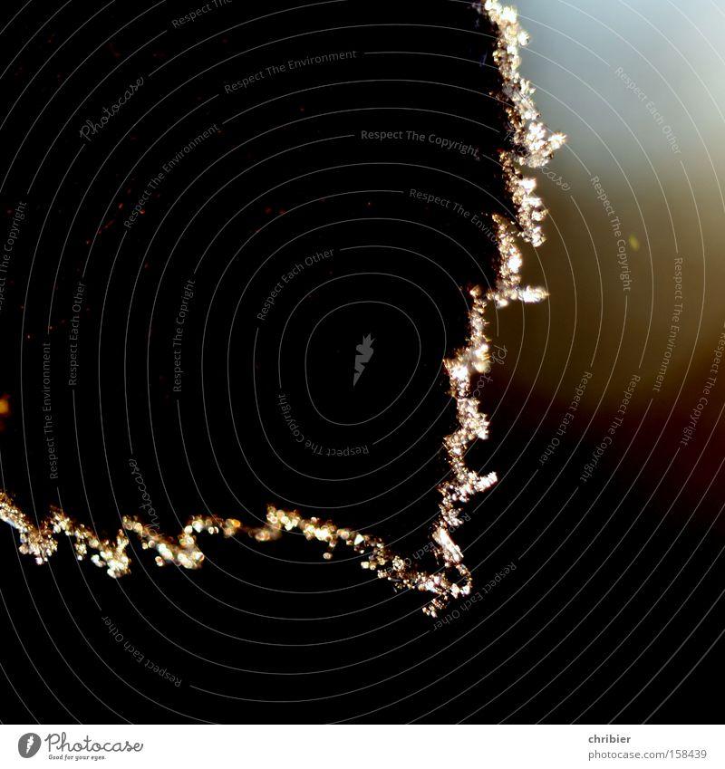 Zackig! Blatt Ecke Am Rand Raureif Gegenlicht glänzend Beleuchtung Lichtbrechung Winter Frost kalt frieren Makroaufnahme Nahaufnahme chribier