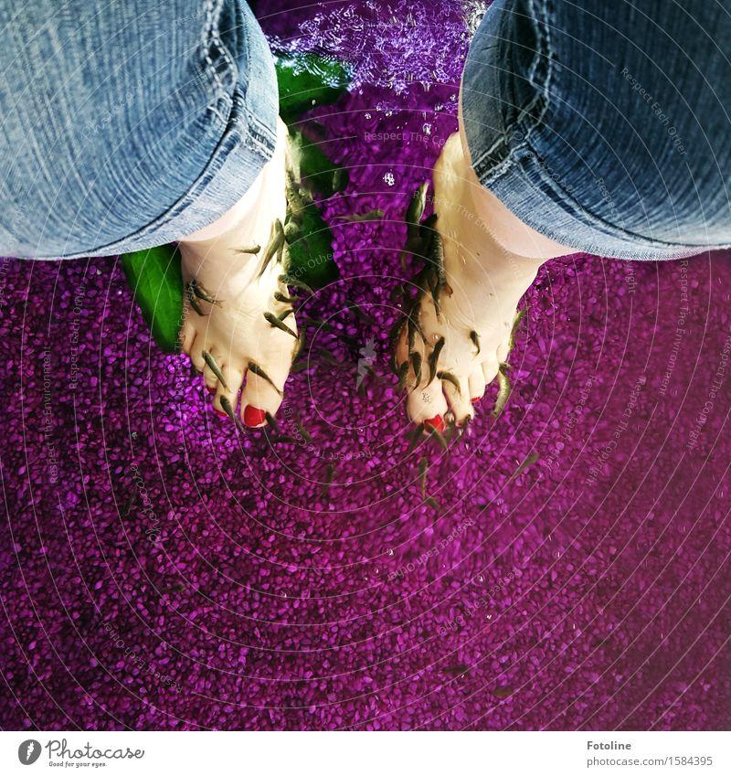 Es ist angerichtet Mensch feminin Beine Fuß Tier Urelemente Wasser Nutztier Fisch Schwarm blau rosa rot Fußbad Pediküre Erholung Wellness Farbfoto mehrfarbig