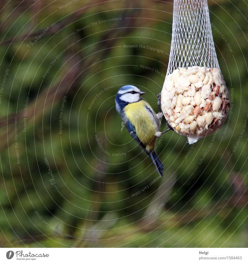 hungrig... Natur Pflanze blau schön grün weiß Tier Umwelt gelb Leben Frühling klein Garten braun Vogel Zufriedenheit