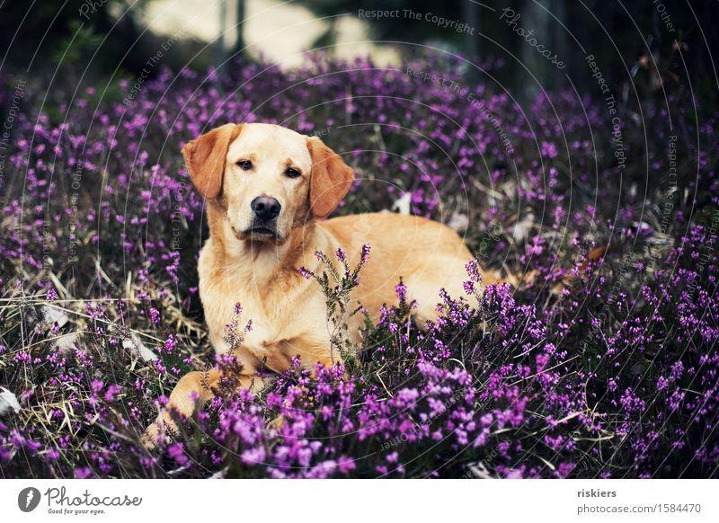 Hübscher Hund Natur Pflanze schön Tier Wald Tierjunges Umwelt Frühling natürlich Freundschaft liegen frisch elegant frei blond
