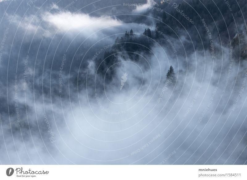 Zauberwald Pflanze Baum Landschaft Wolken dunkel Berge u. Gebirge grau Angst bedrohlich Abenteuer schlechtes Wetter