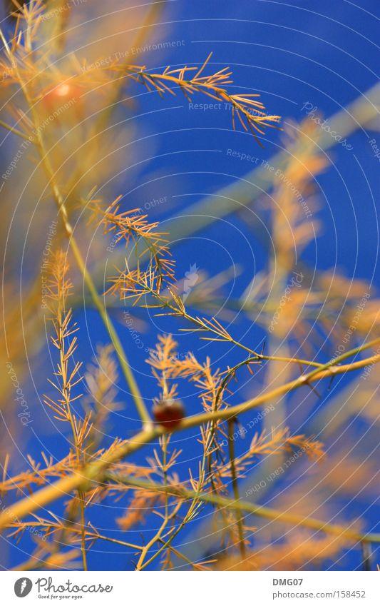 orange:blue Natur blau Pflanze Sommer rot Blume ruhig Winter gelb Herbst Frühling Wetter orange Wind Orange Gold