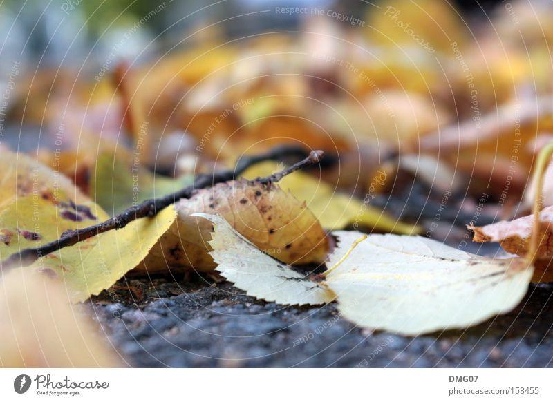 Laub Natur Baum Blatt Winter ruhig Straße Herbst Gefühle Stimmung Trauer Ast Asphalt Jahreszeiten Stillleben