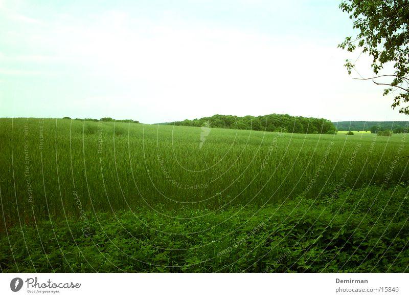 Nett:II Gras grün Sommer Wiese Baum Herbst Frühling Bauernhof Himmel Stimmung anbauen