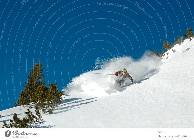wildsau Schnee Berge u. Gebirge Schneefall Geschwindigkeit Skifahren Österreich extrem Blauer Himmel Wintersport Tiefschnee Lawine Free-Ski