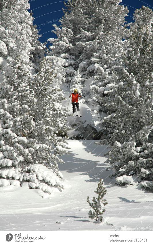 Hermann Maier Schnee Skifahren Berge u. Gebirge Österreich Skier Baum springen Blauer Himmel Free-Ski Tiefschnee Salzburg Bundesland Salzburg extrem Wintersport