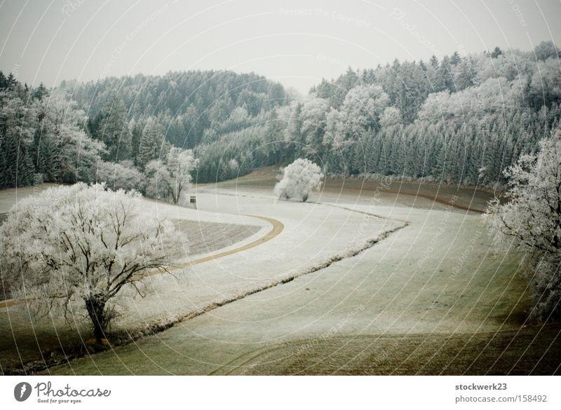 winterreise Baum grün Winter Wald Schnee Wiese Landschaft Deutschland fahren Raureif Bahnfahren Puderzucker