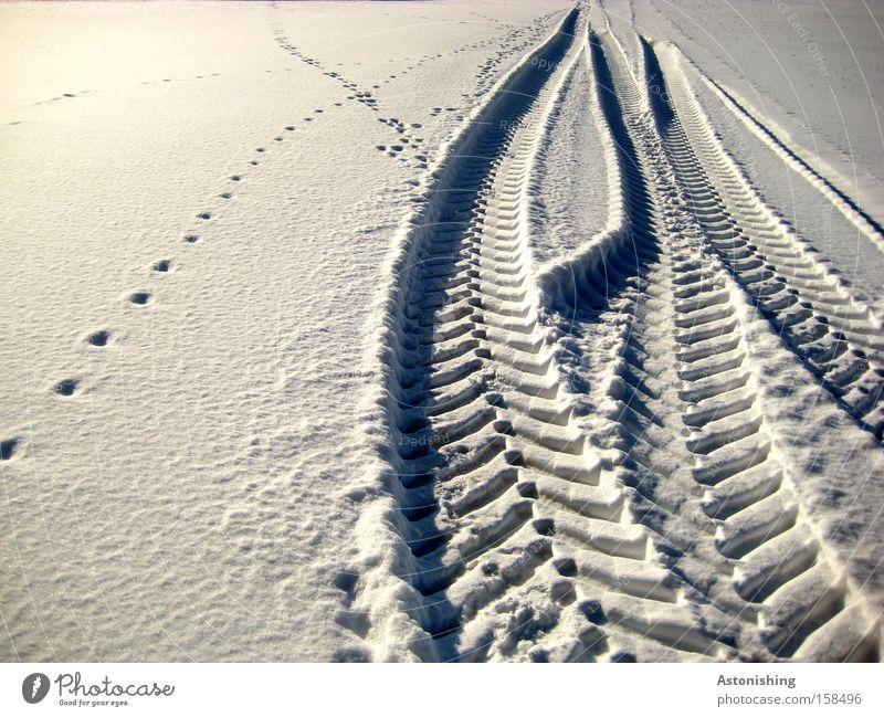 Foto Nummer 100 hinterlässt Spuren weiß Winter kalt Schnee Wege & Pfade Eis Wetter Frost Fahrzeug Fährte Reifenspuren Tiefschnee Schneespur Schneedecke