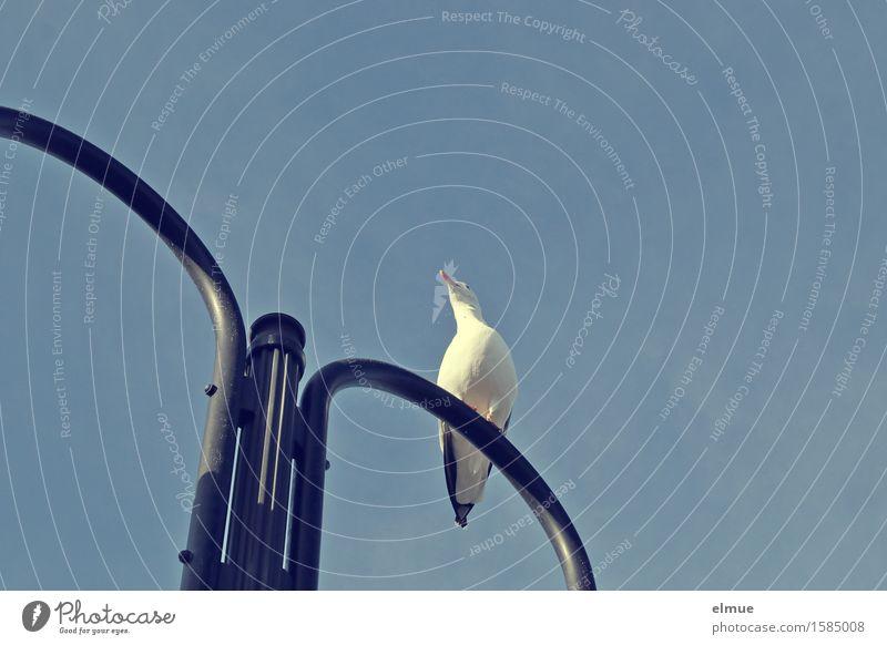 Der Ruf des Meeres. Ferien & Urlaub & Reisen Wolkenloser Himmel Schönes Wetter Möwe Lampe Straßenbeleuchtung Blick sitzen elegant frei klein maritim Neugier