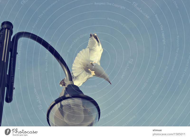 Abflug Ferien & Urlaub & Reisen Wolkenloser Himmel Möwe Straßenbeleuchtung Abheben fliegen elegant frei Glück Lebensfreude Romantik achtsam Schüchternheit Angst