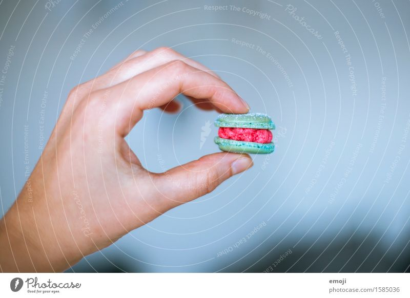 Luxemburgerli Dessert Süßwaren Ernährung Picknick Fingerfood Hand lecker süß Farbfoto mehrfarbig Innenaufnahme Nahaufnahme Detailaufnahme Tag