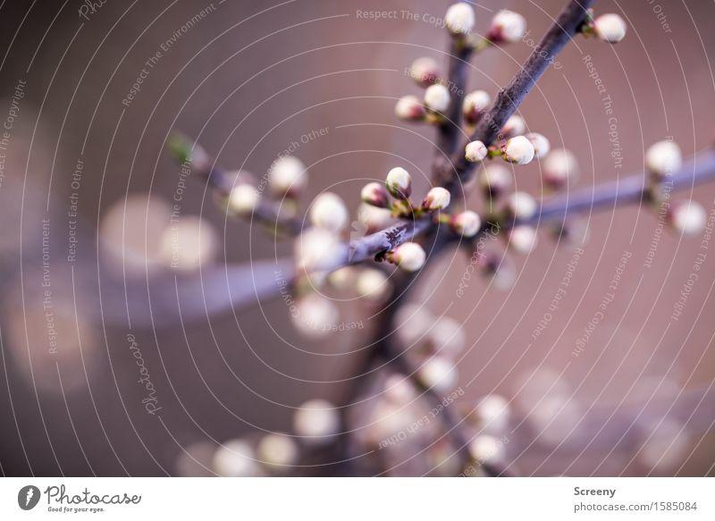 Kreuz und quer Natur Pflanze Frühling Sträucher Blüte Park Wald Blühend klein weiß Frühlingsgefühle Geäst Ast durcheinander Blütenknospen Farbfoto Außenaufnahme