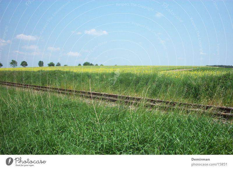 Gleise durchs Feld Raps grün Sommer Verkehr Himmel Eisenbahn Verkehrswege