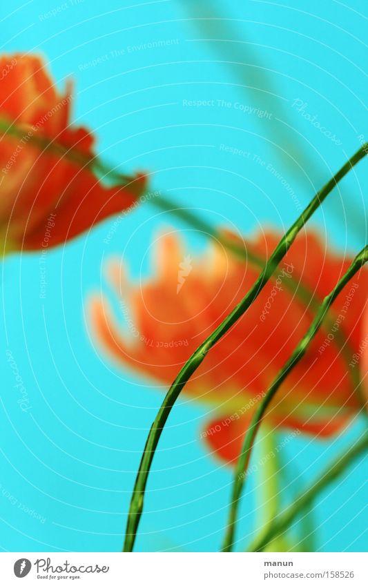 Blumengruß Farbe Erholung Frühling Blüte außergewöhnlich orange Zufriedenheit Design Dekoration & Verzierung elegant frisch modern Geburtstag Fröhlichkeit
