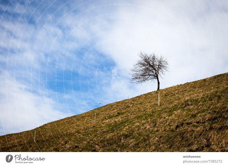 Against all odds harmonisch Wohlgefühl Erholung Meditation Ausflug Freiheit Umwelt Natur Landschaft Pflanze Erde Himmel Wolken Frühling Herbst Klima Klimawandel