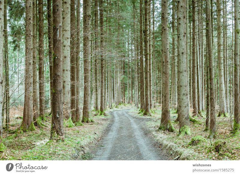 A long way home through a springtime forest Natur Pflanze grün Baum Erholung Landschaft ruhig Wald Umwelt Frühling Wege & Pfade Holz grau braun Luft