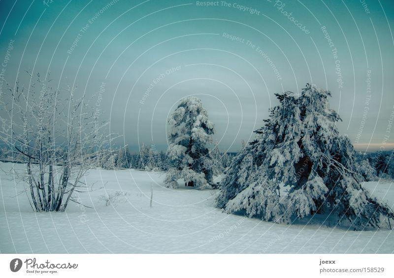 Neuschnee am Abend Natur Winter Wolken kalt Schnee Eis Frost dünn Ast lang Tanne Waldlichtung himmelblau Winterstimmung