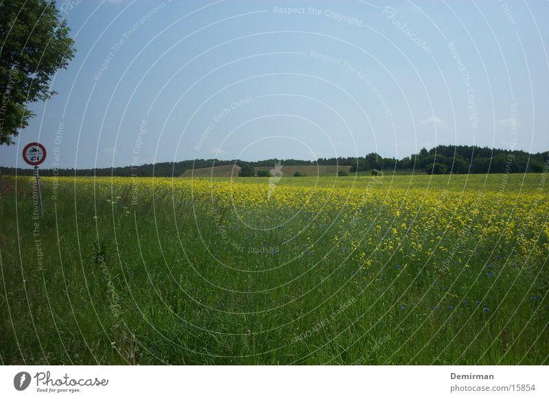 Schild auf Wiese Feld Sommer Schilder & Markierungen Sonne Hinweisschild