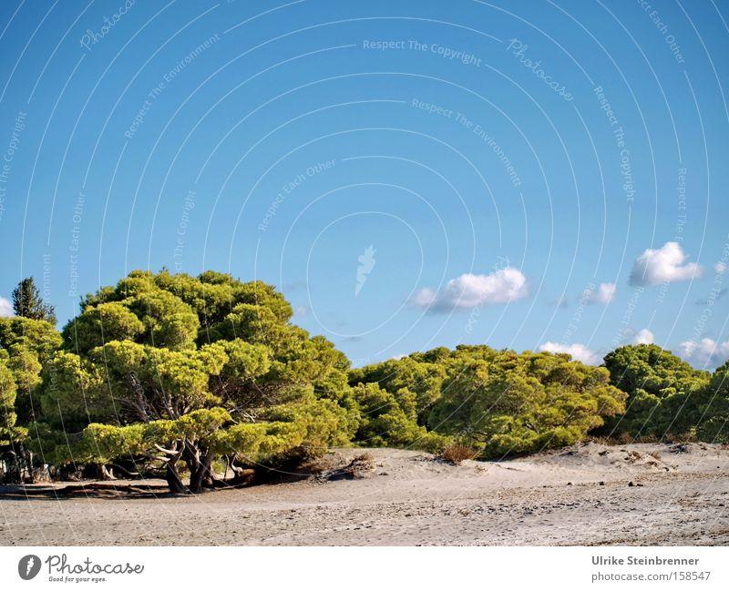 Kiefern bieten Schatten am Strand auf Sardinien Farbfoto Außenaufnahme Menschenleer Textfreiraum oben Tag Sonnenlicht ruhig Duft Ferien & Urlaub & Reisen Sommer