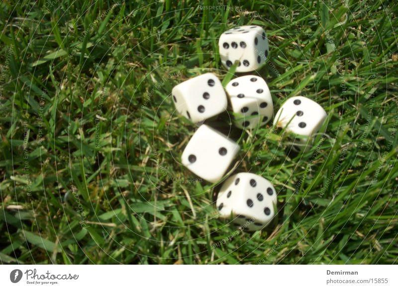 Würfel im Gras Freude Spielen Freizeit & Hobby Ziffern & Zahlen rechnen Kniffel