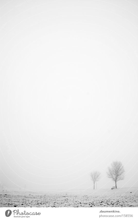 freunde Partnerschaft Nebel Baum Ast Landschaft Winter leer Schwarzweißfoto Schnee Erde