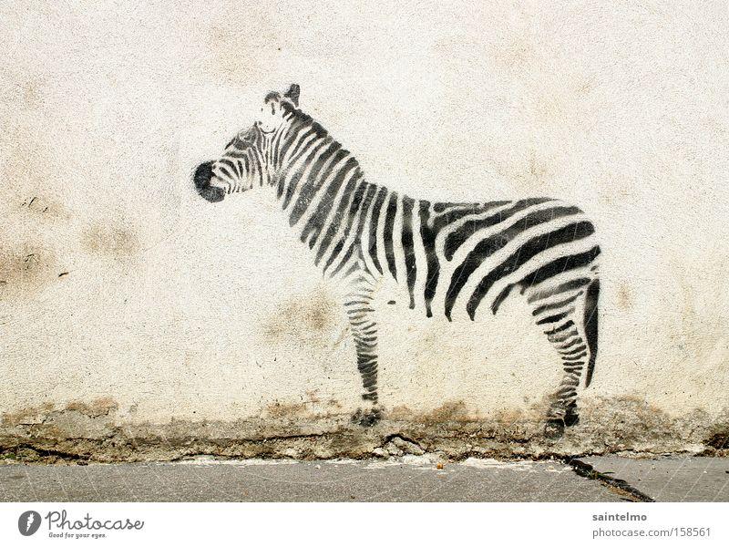 street-graffiti-zebra Graffiti Gemälde Zebra Illusion Kultur Kunst Mauer Täuschung Lebewesen Stadtleben Wand Tier Kreativität Wandmalereien Streifen