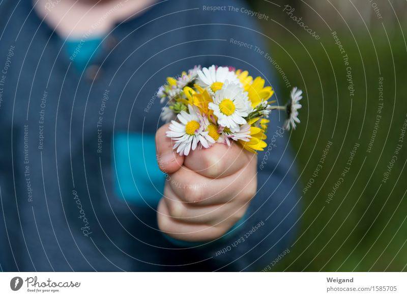 Mitbringsel Mensch Kind blau weiß Hand Mädchen Junge Familie & Verwandtschaft Garten Feste & Feiern Zufriedenheit Geburtstag Kindheit Blühend Finger Bildung