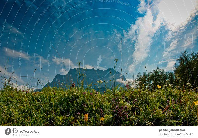 Bergwiese Österreich Umwelt Natur Landschaft Pflanze Tier Erde Luft Wolken Frühling Klima Wetter Schönes Wetter Blume Gras Sträucher Blatt Blüte Wildpflanze