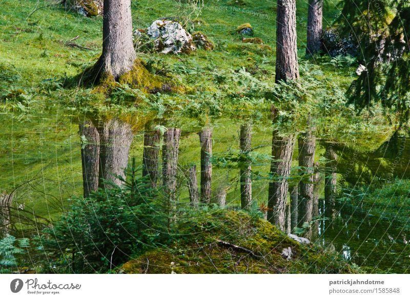 Wald Spiegelung Umwelt Natur Landschaft Pflanze Tier Erde Wasser Frühling Klima Klimawandel Baum Gras Moos Wiese Alpen Moor Sumpf Menschenleer Wanderschuhe