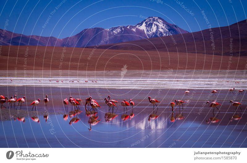 Lagune Kara Lagune mit Flamingos und Reflexion eines Berges Natur Ferien & Urlaub & Reisen blau Farbe weiß Landschaft rot Tier Berge u. Gebirge Menschengruppe