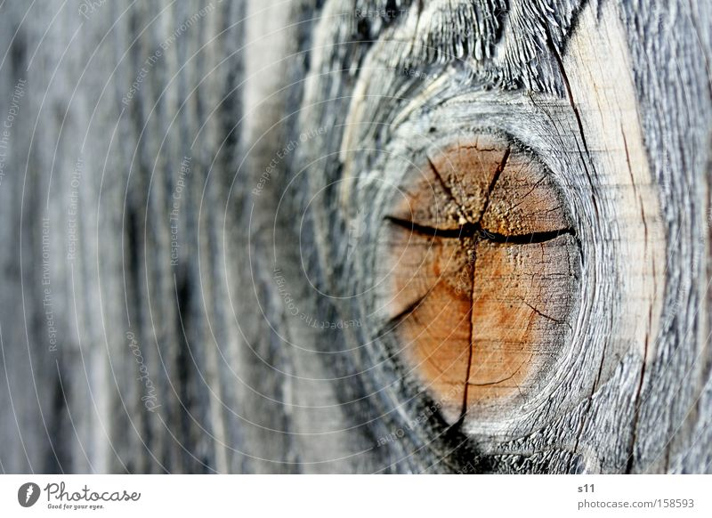 Holzig Natur Auge braun Baumstamm Möbel Riss Heizkörper Brennholz Tischler robust Jahresringe Handwerker Makroaufnahme