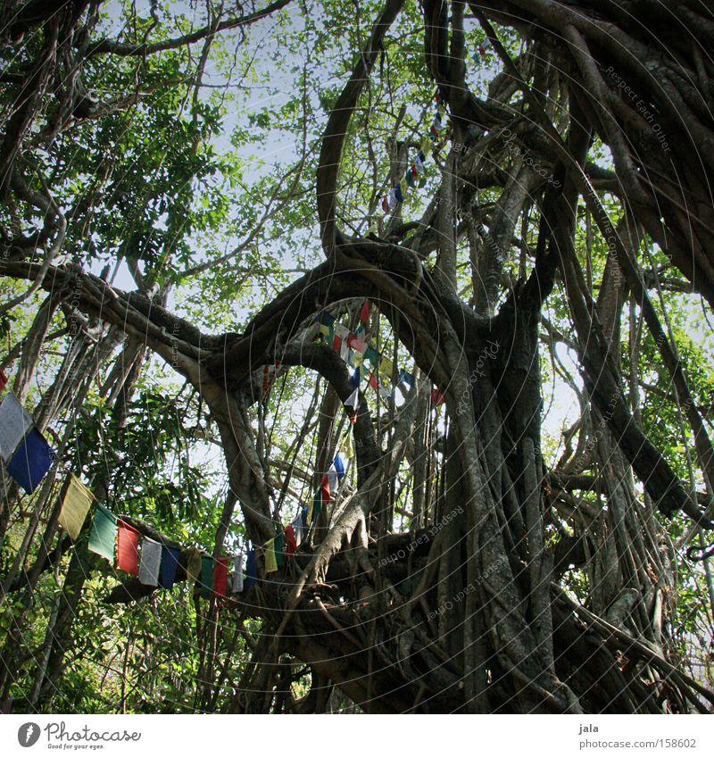 heiliger baum Natur alt Baum Frieden Urwald Indien Hippie Asien gewaltig Gebetsfahnen