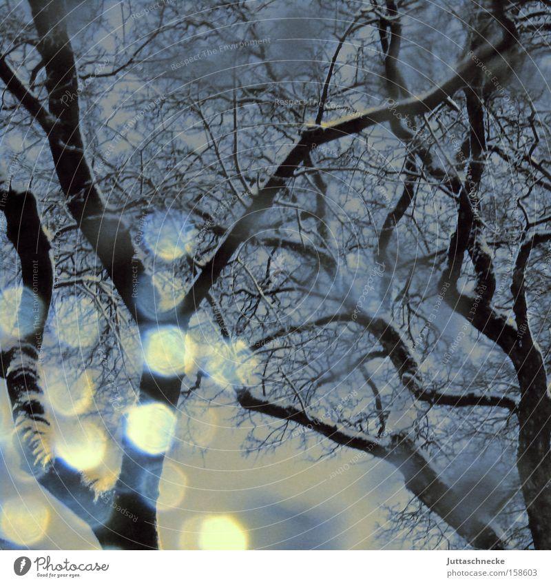 Lichtgeister Schnee Schneefall Schneesturm Schneeflocke Baum Winter kalt Eis Reflexion & Spiegelung Ast Hoffnung Wetter Frieden Reflexion u. Spiegelung