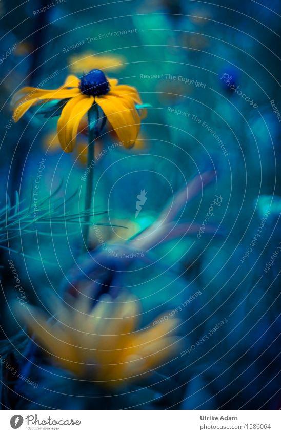 Gelber Sonnenhut Garten Innenarchitektur Dekoration & Verzierung Valentinstag Muttertag Kunst Kunstwerk Natur Pflanze Sommer Blume Sträucher Blatt Blüte