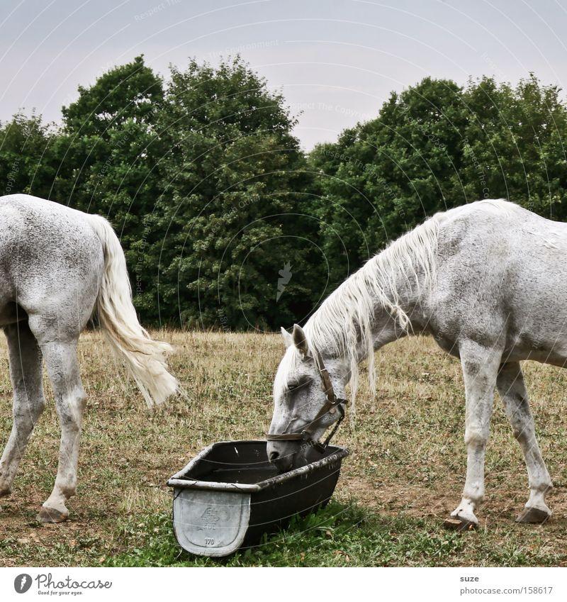 Verschimmelt Himmel Natur weiß Baum Tier Umwelt Wiese lustig Kopf Feld paarweise Sträucher Schönes Wetter Pferd trinken Hinterteil