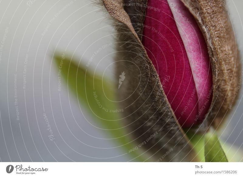 Frühling Natur Pflanze Blühend Duft ästhetisch authentisch einfach elegant frisch natürlich braun grün rot Frühlingsgefühle Gelassenheit geduldig ruhig