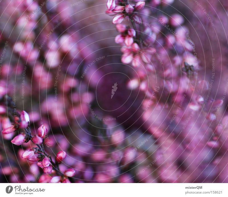 Dancing In The Wind. Natur Farbe Frühling Blüte violett Umweltschutz Heimat Republik Irland Nordirland Sächsische Schweiz Heidekrautgewächse
