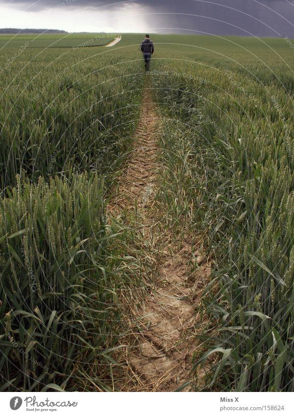 Wanderschaft Farbfoto Außenaufnahme Getreide Sommer wandern Joggen Mann Erwachsene Wolken Regen Gewitter Feld Straße Wege & Pfade gehen laufen Traurigkeit