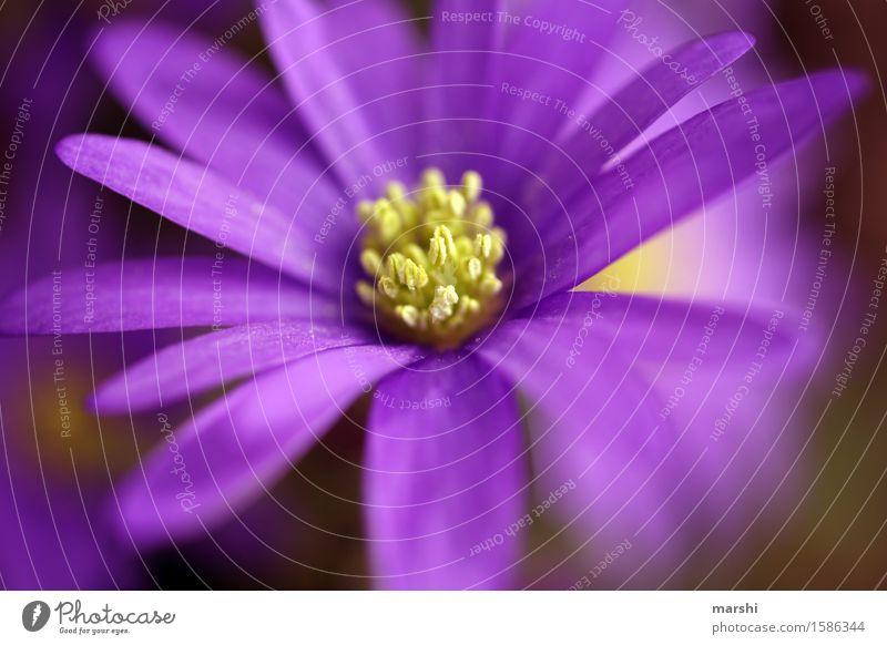 blühend Natur Pflanze schön Sommer Blatt Blüte Frühling Garten Stimmung Blühend violett Blütenblatt