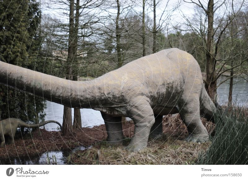Als es den Menschen noch nicht gab... Dinosaurier Pflanzenfresser Urzeit Sumpfzypresse Macht schwer langhalsig ausgestorben Koloss Vergänglichkeit Brachiosaurus