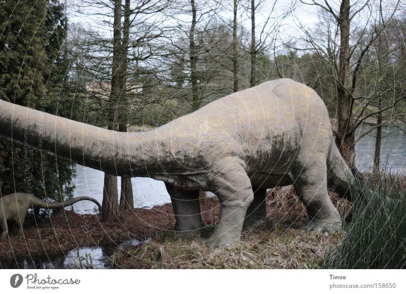 Als es den Menschen noch nicht gab... groß Macht Vergänglichkeit Zeit Zypresse schwer Koloss Dinosaurier ausgestorben Urzeit Pflanzenfresser langhalsig Sumpfzypresse