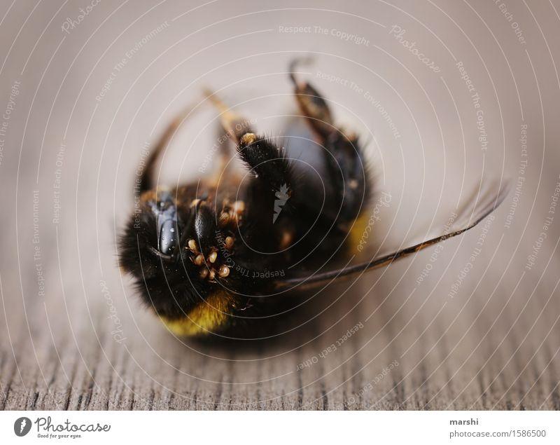 Hummelleben Natur Tier Wildtier Totes Tier 1 Stimmung Verwesung spinnen Ekel Flügel Insekt Farbfoto Außenaufnahme Nahaufnahme Detailaufnahme Makroaufnahme