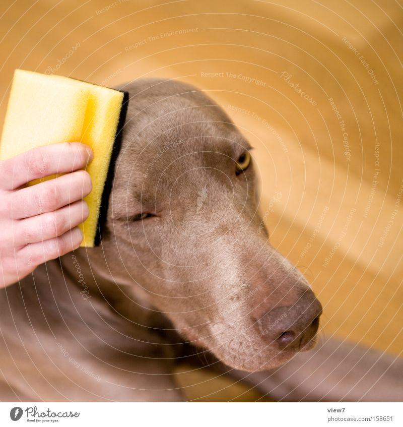 dufte. Hand schön Erholung Hund Gesundheit Nase ästhetisch Aktion authentisch Sauberkeit Reinigen streichen Vertrauen Fell machen