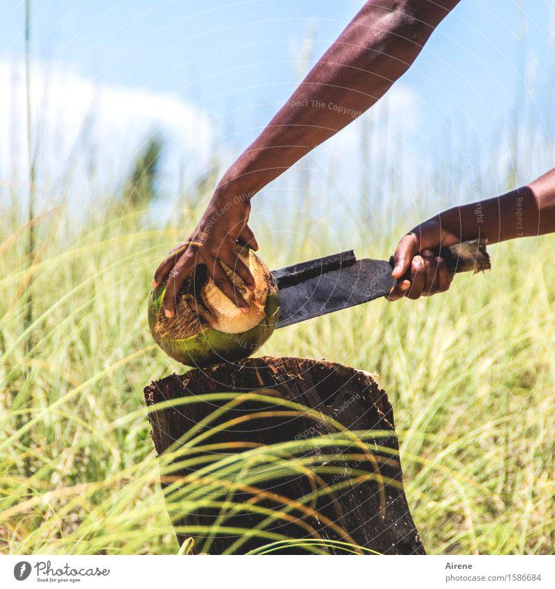 grausam | Gewalt anwenden Mensch Jugendliche Hand Junger Mann natürlich Holz Lebensmittel braun Metall Arbeit & Erwerbstätigkeit Frucht maskulin Kraft Arme