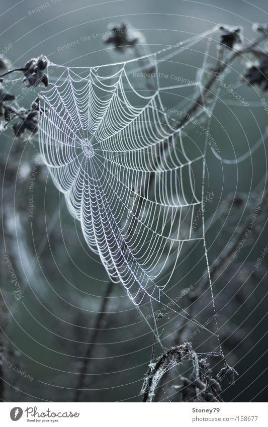 Spinnennetz Natur grün Pflanze ruhig Wiese kalt grau nass Wassertropfen trist Netz zart gruselig Tau vertrocknet Spinnennetz