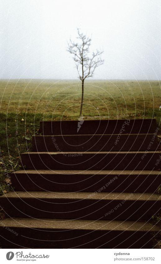 Ganz allein. Einsamkeit Treppe Baum schmal zerbrechlich Wiese Natur Gesellschaft (Soziologie) Lebensraum kämpfen Konkurrenz Architektur Beton Detailaufnahme