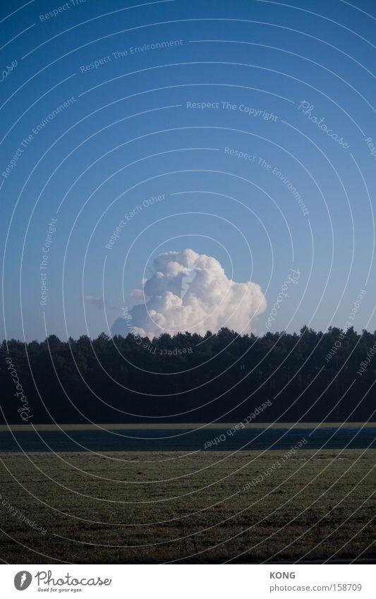 the awakening Himmel Wolken Einsamkeit Kraft Wetter Horizont Kraft Wachstum weich stark leicht aufwachen Physik Watte Zuckerwatte
